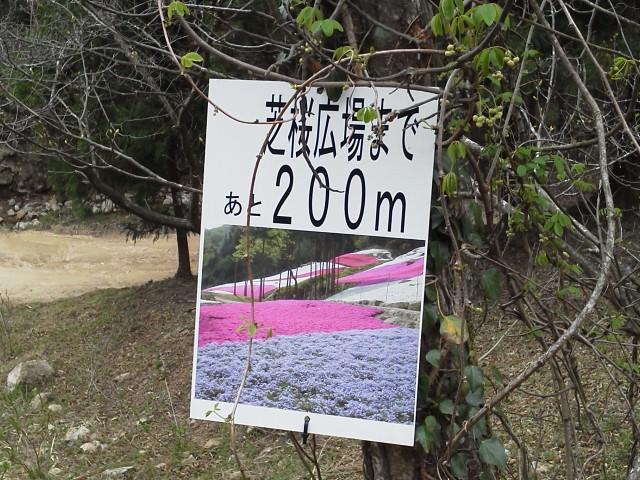 芝桜の小道